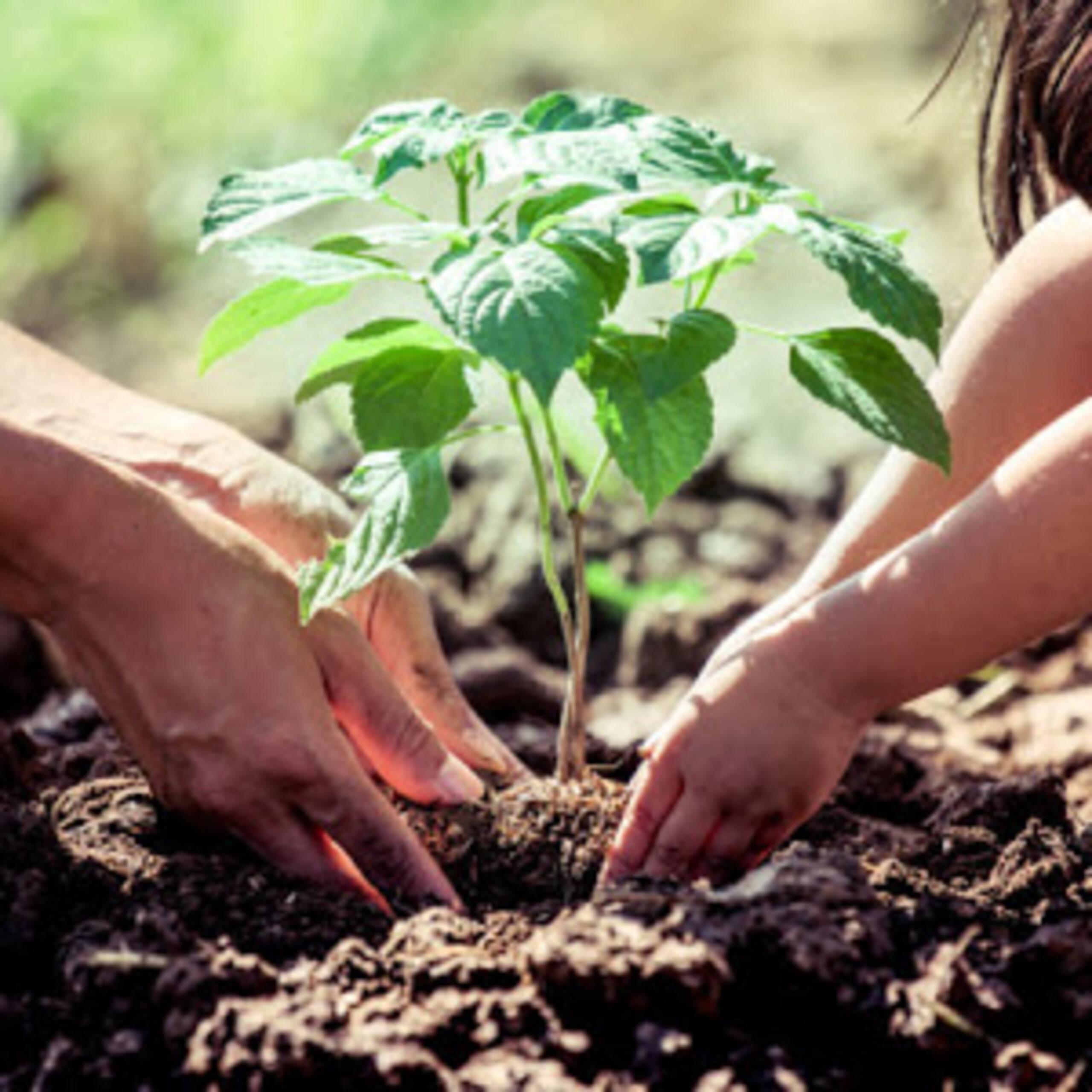 Plantar & Sus Beneficios!